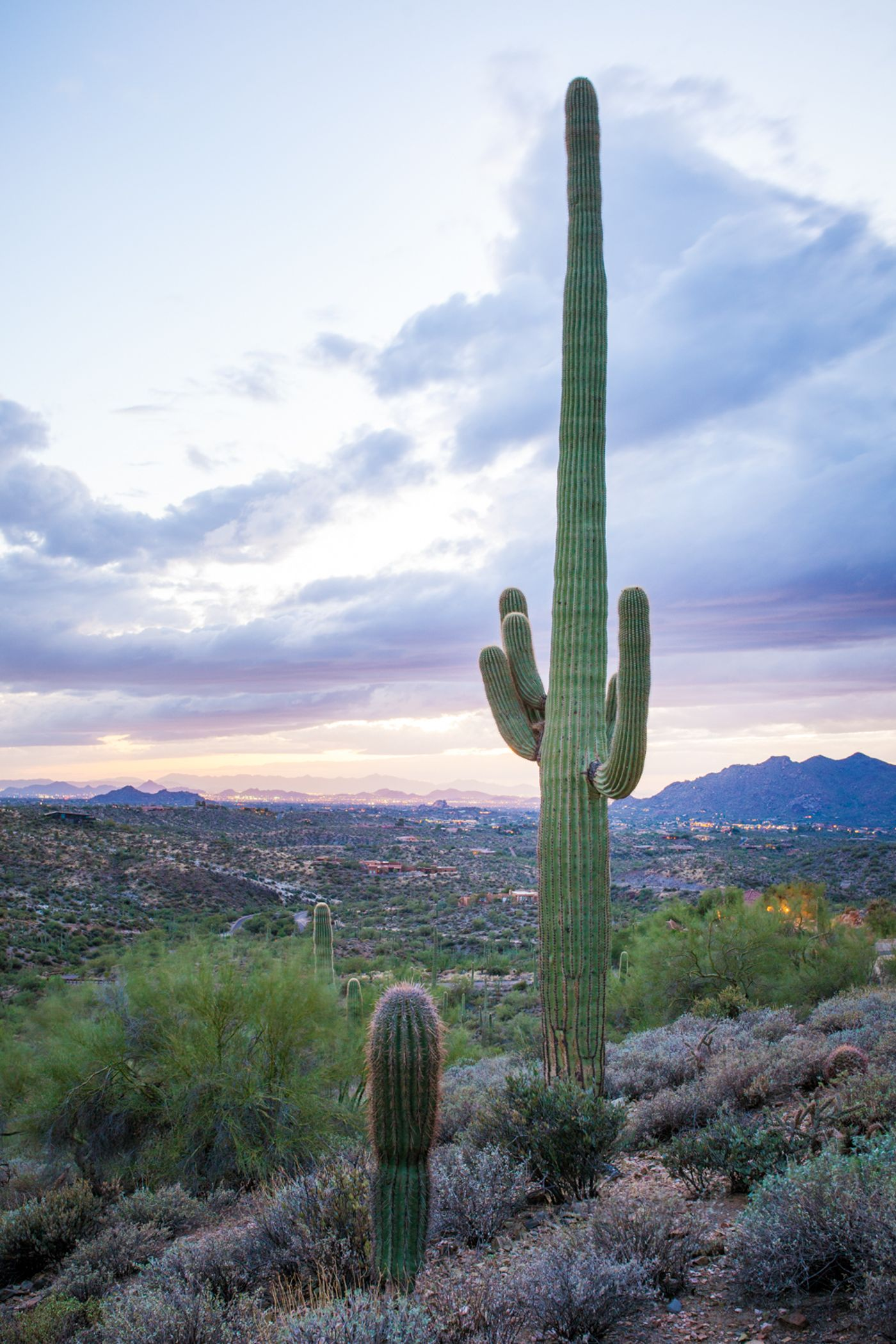 Stately saguaro on Lot 7 Carefree Ranch Homesteads