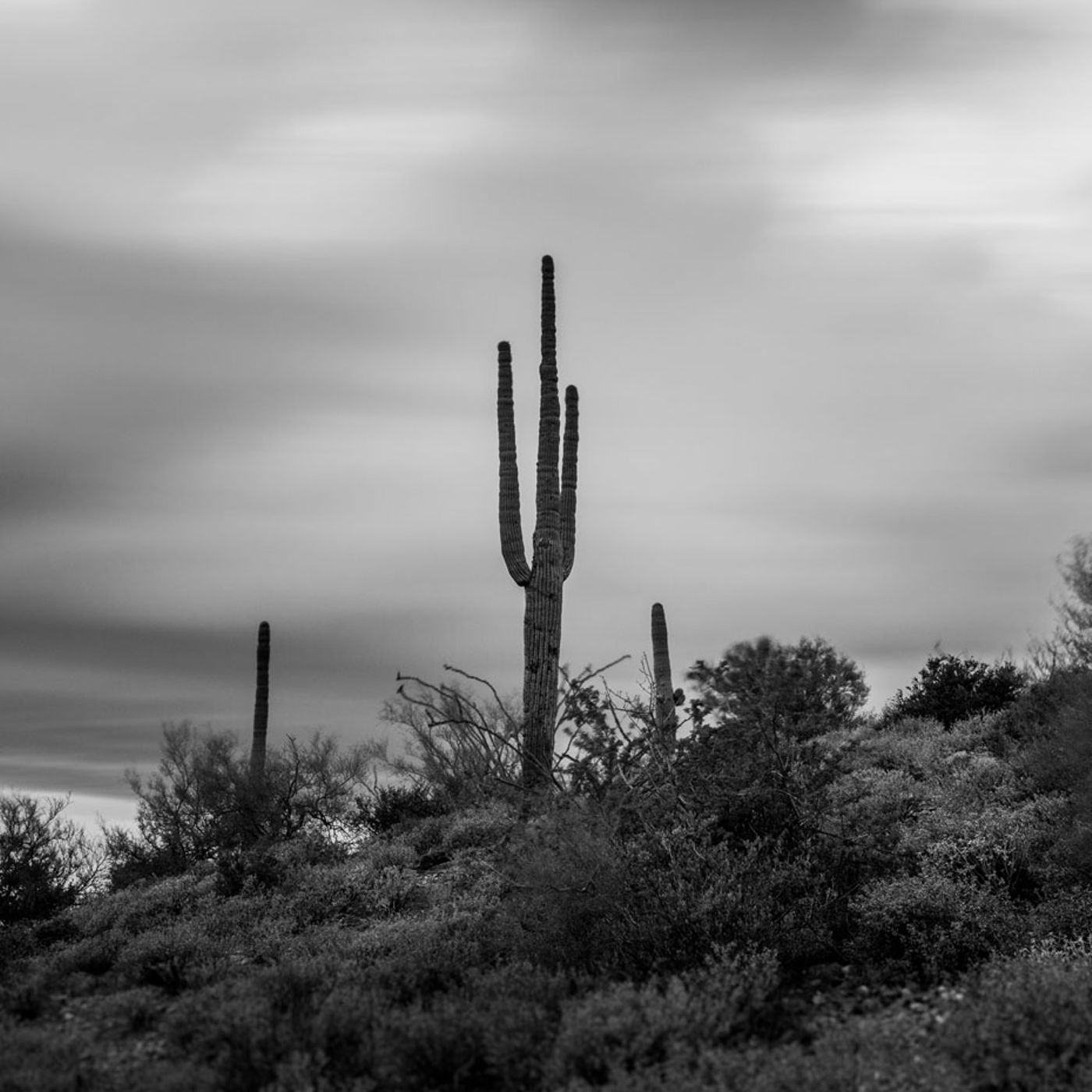 Saguaro silouette Carefree Ranch Homesteads
